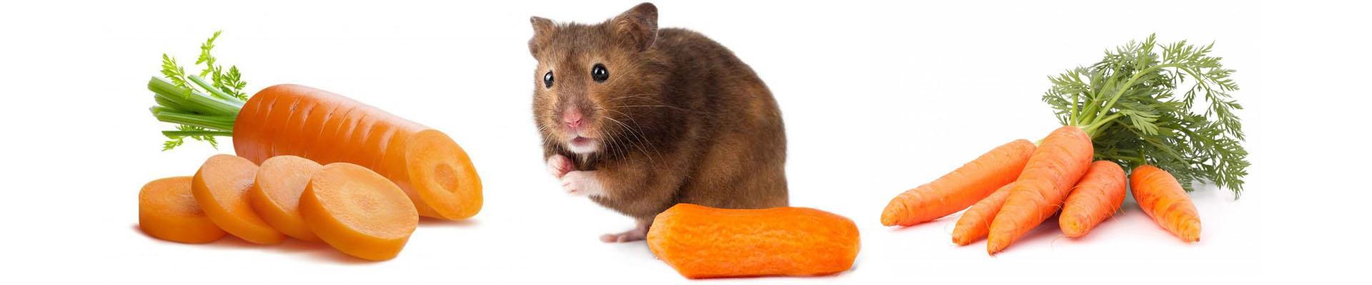 Можно ли хомяку морковь сырую, вареную или соленую