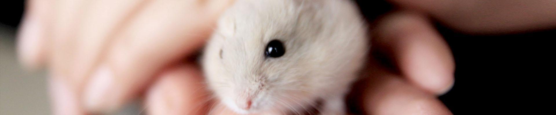 клетка для хомяка: как правильно выбрать и что в ней должно быть