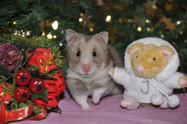 Новогодние хомяки фото под елкой
