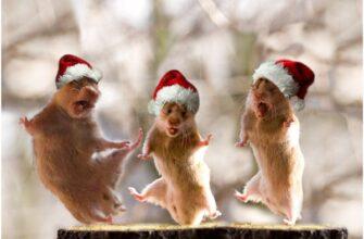 Новогодние хомяки танцуют