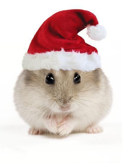 Новогодний хомяк в красной шапочке Санты