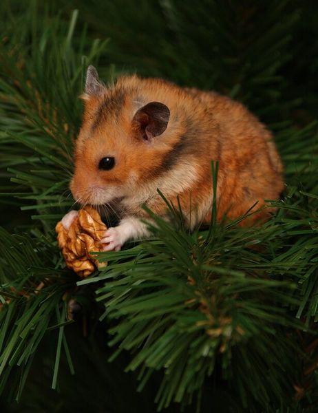 Новогодний хомяк на елке