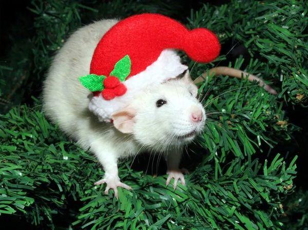 Новогодний хомяк в красной шапочке