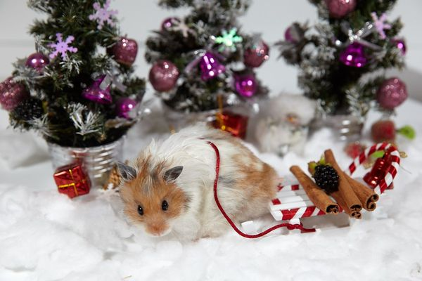 Новогодние хомяки приехали на елку