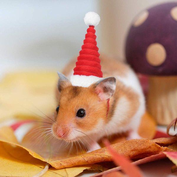 Новогодние хомяки забавная фотка в красном колпачке