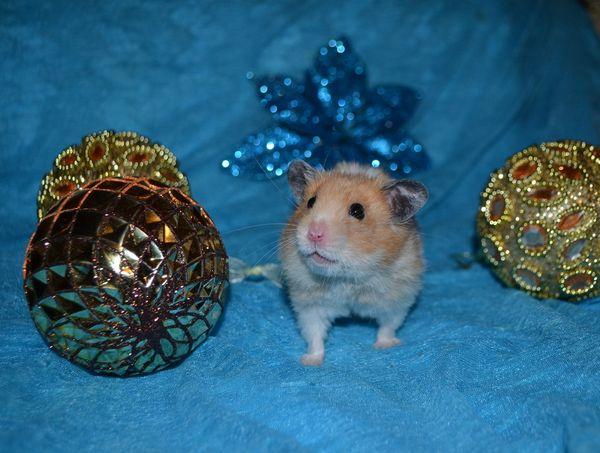 Новогодние хомяки картинка с шариками
