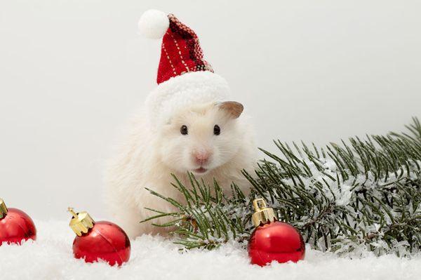 Новогодний хомяки в шапочке и с подарками
